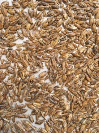 Getreide selbst mahlen - Spelzen dran