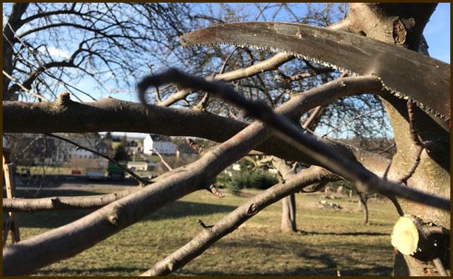 Obstbäume schneiden - Wie du Obstgehölze richtig schneiden kannst