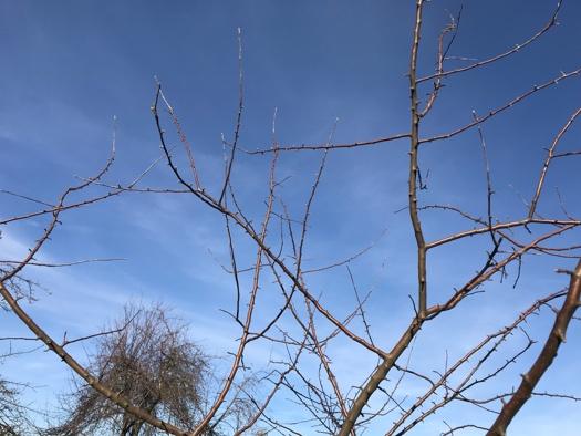Obstbäume schneiden - Welche Äste