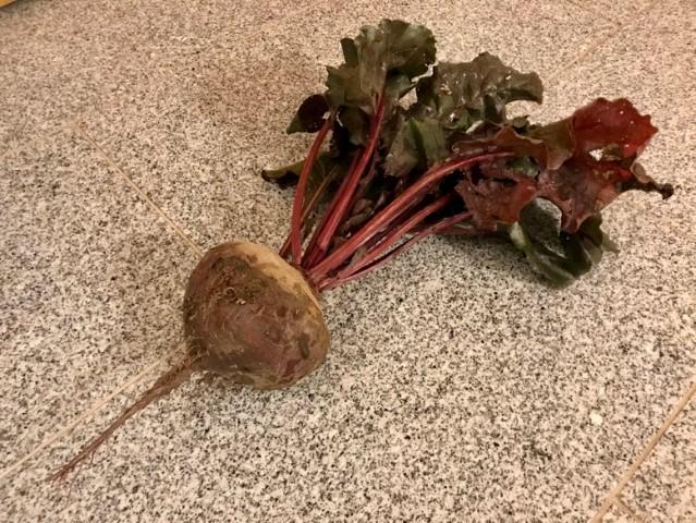 Rote Beete - so sieht eine Pflanze aus