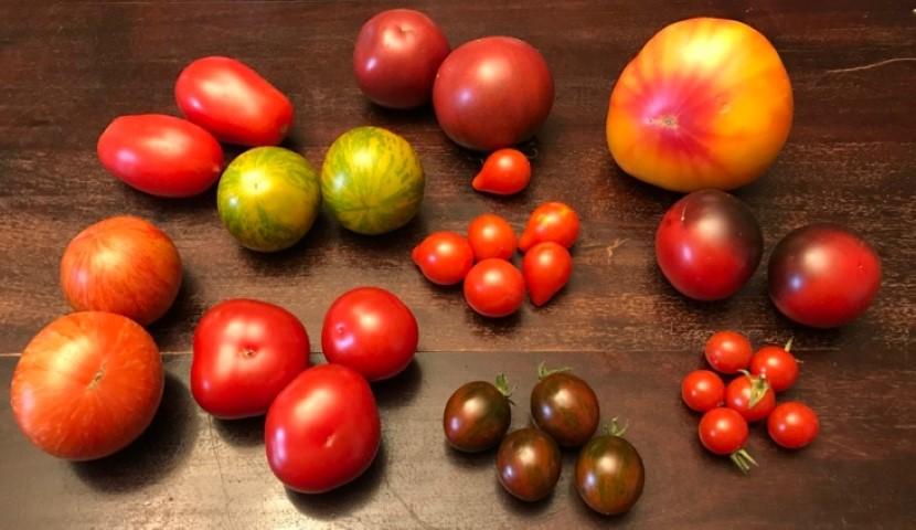 Direktsaat oder Vorziehen - Tomaten, Paprika und Chili 2