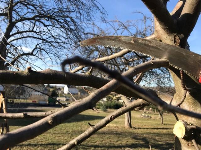 Obstbäume schneiden - Astsäge