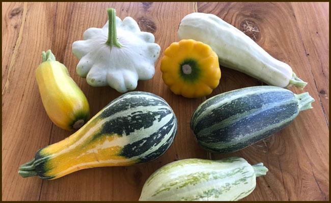 Zucchini anbauen