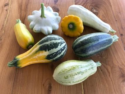Zucchini in unterschiedlichsten Formen und Farben