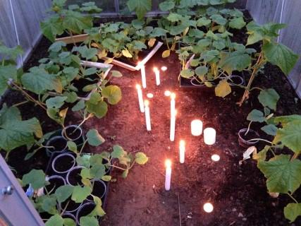 Gurkenvielfalt - Kerzen für sanfte Wärme
