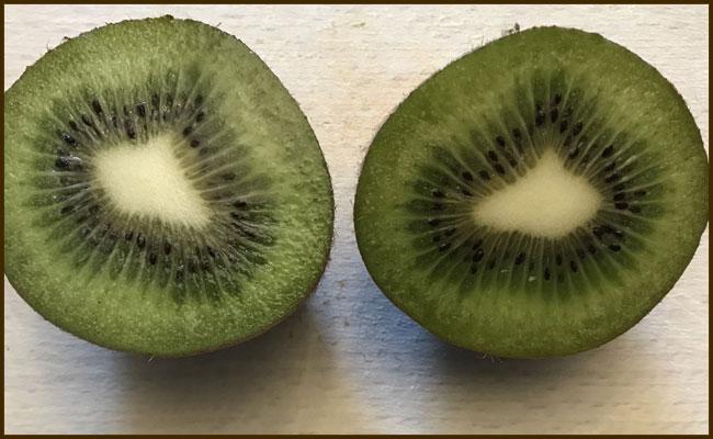 Kiwipflanzen selbst ziehen